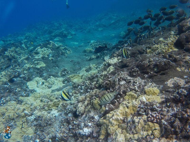 Snorkel en el Cráter Molokini - Maui