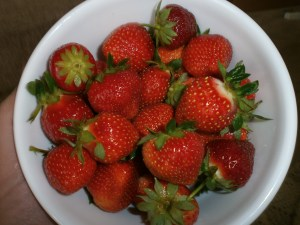 Delicious strawberries from our strawberry patch. . .and there's lots more to come!
