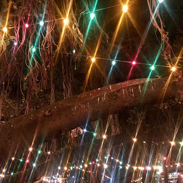 Lights on the Banyan Tree