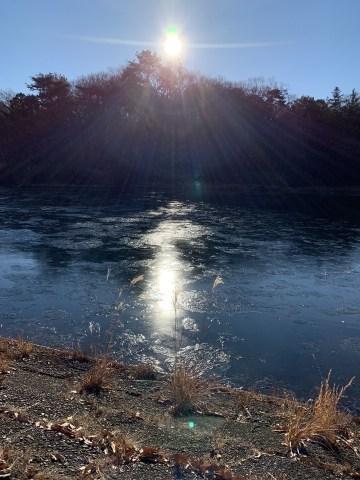 凍った池 狭山公園