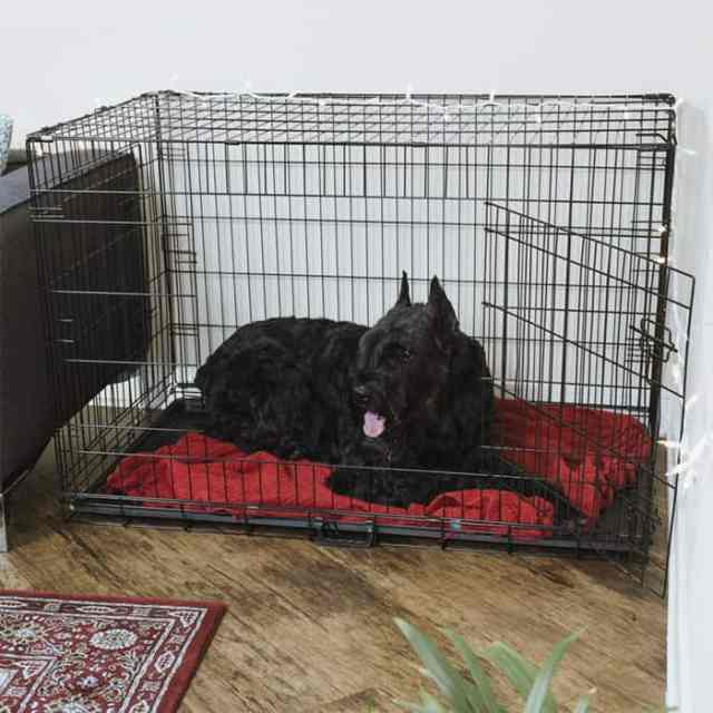 Second close looking view of the Best Dog Crate