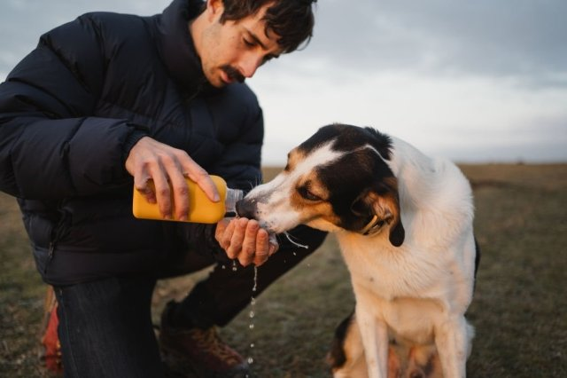 Man helps a dog by drinking water