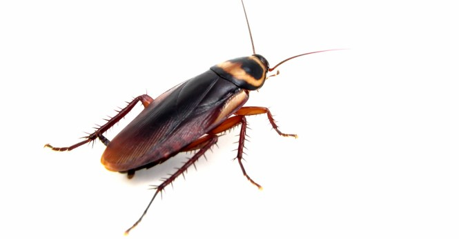 What Attracts Roaches To Your Home