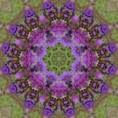 10324642-purple-floral-mandala