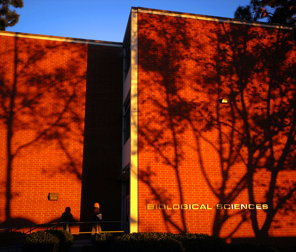 Trees cast black shadows on brick red Biological Sciences building.