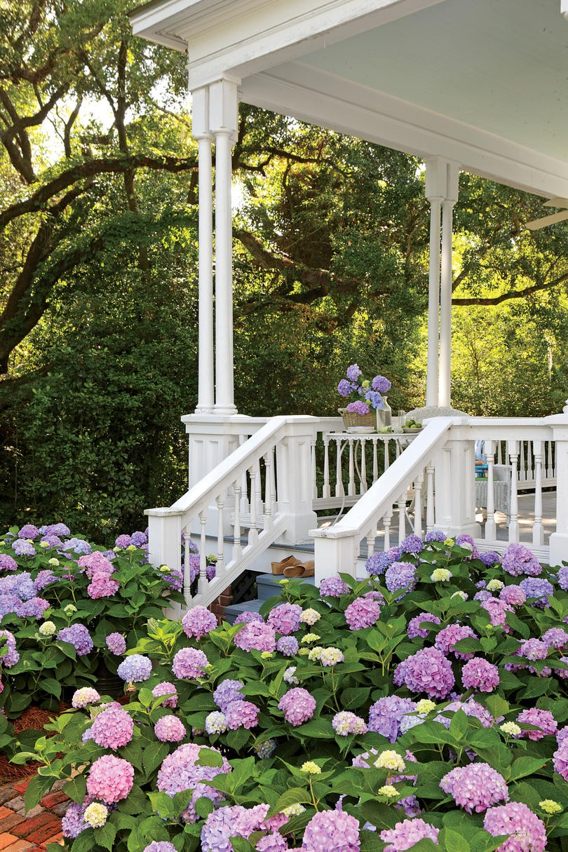 Better Homes And Gardens Plants
