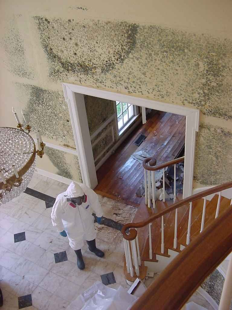 Can You Stay In Home During Mold Remediation