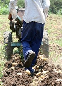 Agricultural worker, BLS handbook