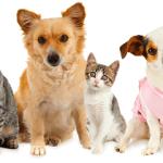 [Vidéo] DIY Coussin/Lit pour animaux