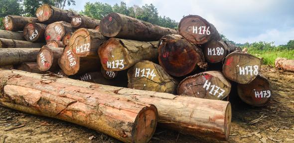 Image result for slavery deforestation