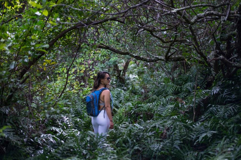 Hikes on Oahu, Hawaii: Olomana Hike - Tropical Jungle