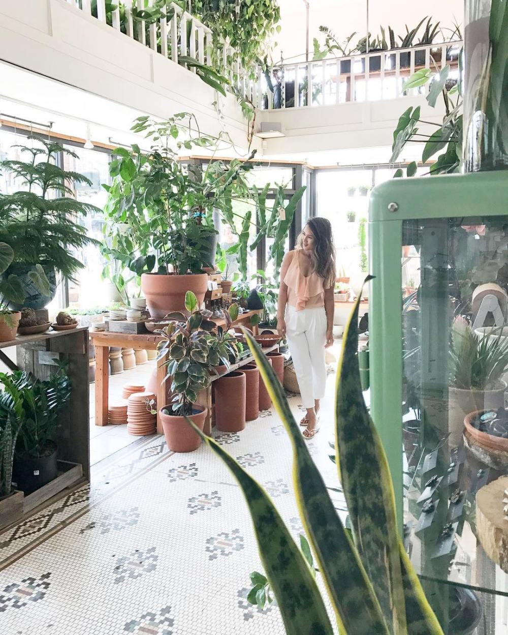 Where to buy house plants in Vancouver