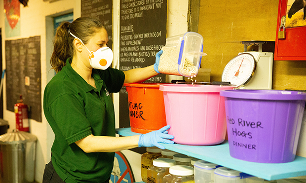 Zookeeper Kate Sanders prepares food for the animals