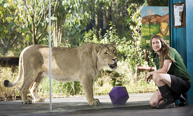 Zookeeper Kate Sanders with Asiatic lion