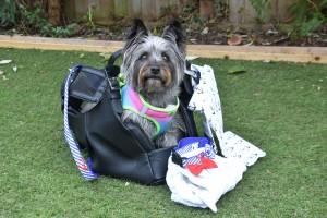 Dog travel designer bag