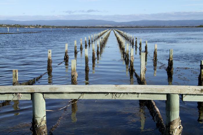 freycinet, tasmania, australia, oyster farm