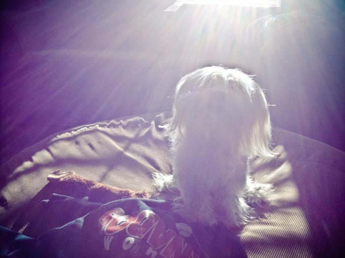 Ella in the sunlight