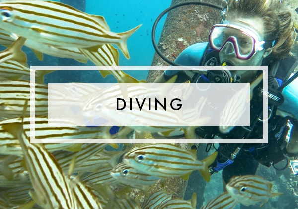 Posts on Diving