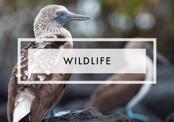 Posts on Wildlife