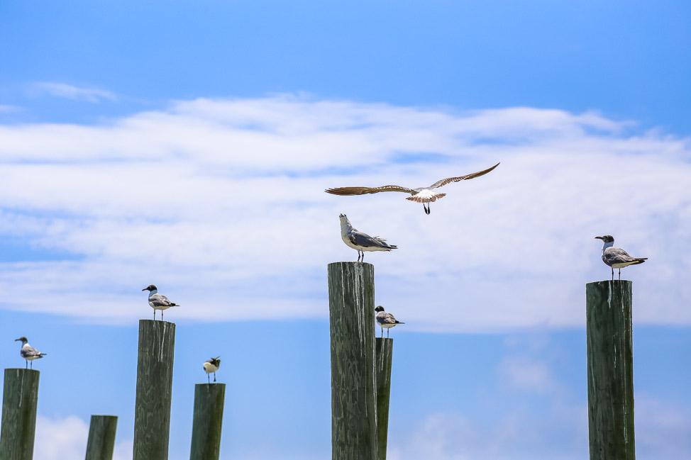 Visit Florida: Best Photo Opps in Panama City Beach