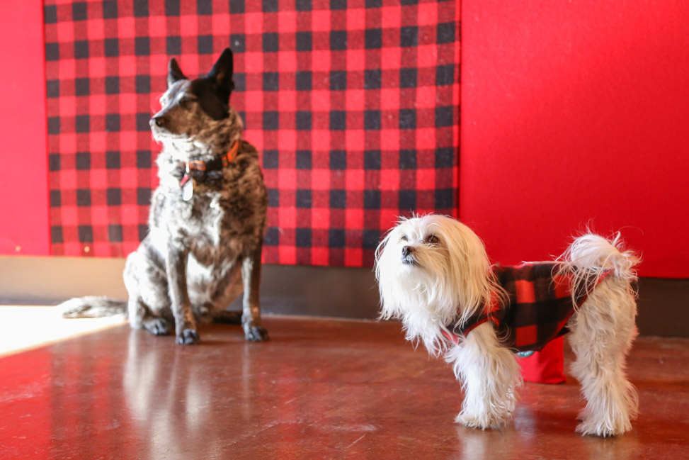 Pet-Friendly Travel: Colorado with Dogs