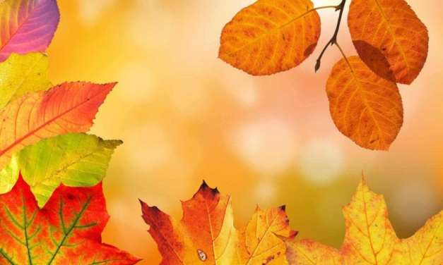 How to tweak white balance for better photos of autumn leaves