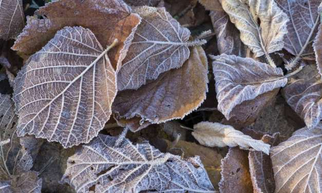 How to photograph frosty scenes: 7 quick tips