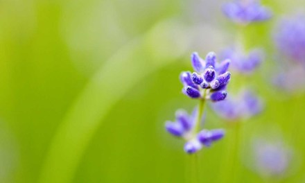 How to get shallow depth-of-field effects with any camera