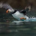 Gallery: wildlife photographers capture rare animals with Sony RX10 III