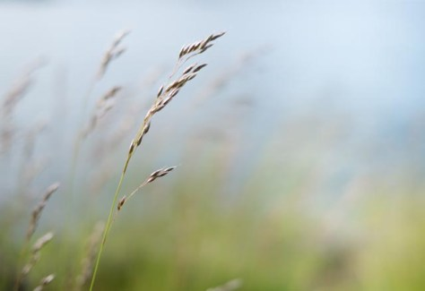 Grasses, Lake Superior, 2014 - Photograph by Jeff Curto