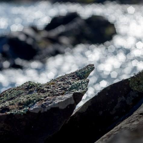 Lake Superior Shoreline, 2016 - Photograph by Jeff Curto