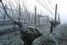 Frost at Clos Electrique