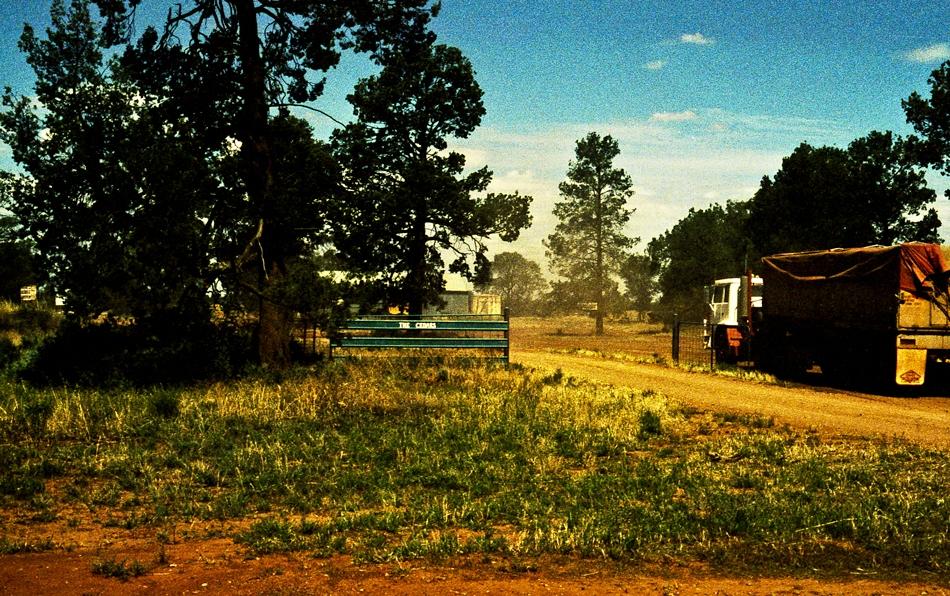 Cedars, Australia
