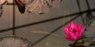 Queen Sirikit Botanical Garden in Chiang Mai