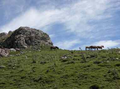 Pyrenees 25 rock and horses