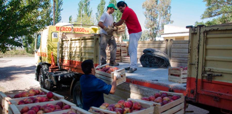 transporte-de-frutas