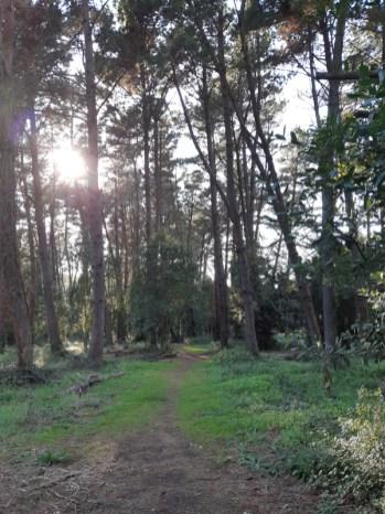 ACER parco della cellulosa 2018-10-08_16-34-26