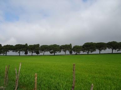 solfatara Pomezia2