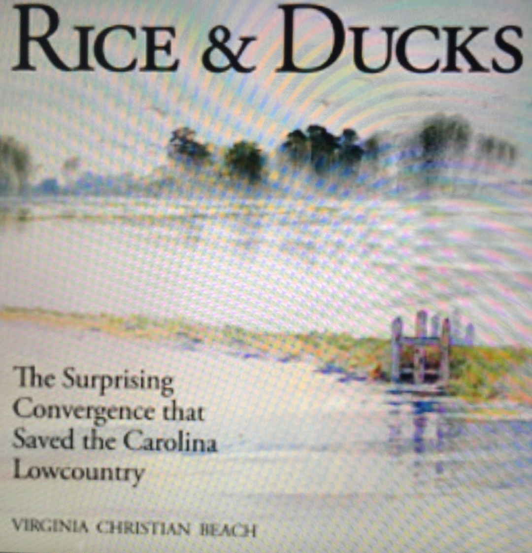 rice and ducks