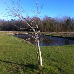 """I Was About to be """"Skunked"""" at the Coveted Pear Tree Stand when Finally…"""