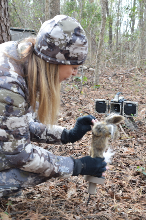 what decoy to use when coyote hunting