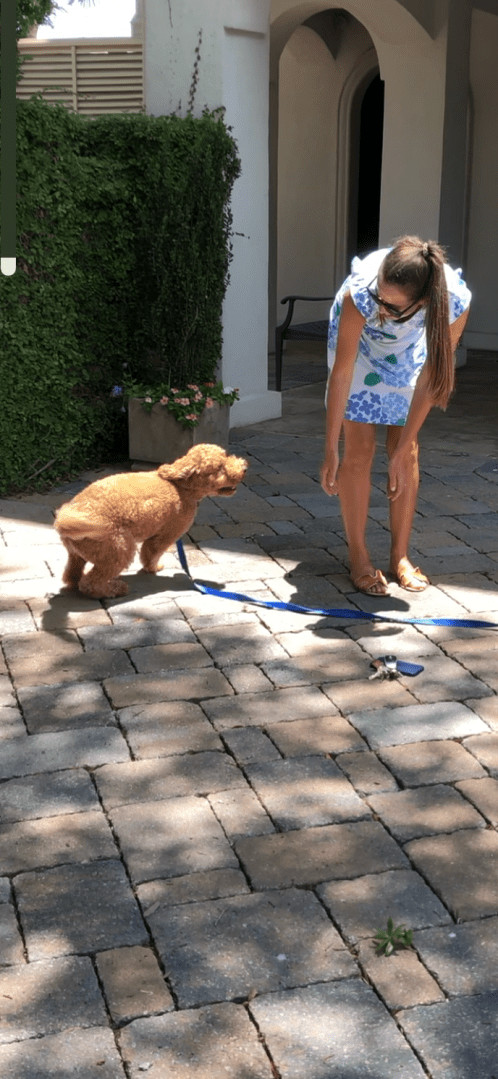 dog happy to see mommy
