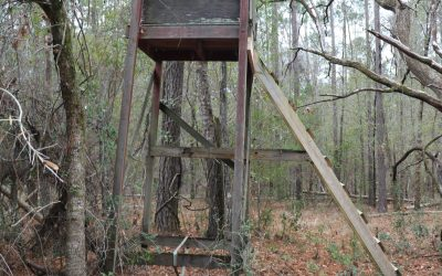 If This Weathered Old Deer Stand Could Talk
