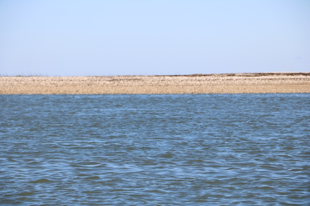 shellback on the salt marsh