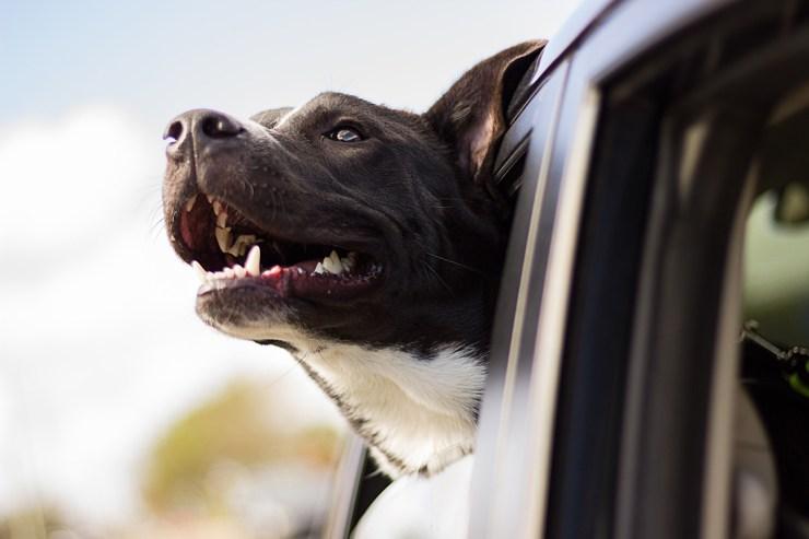 Wohnmobilurlaub mit Hund