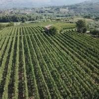 Azienda Vinicola Cardosa Castel San Lorenzo DOC Cilento