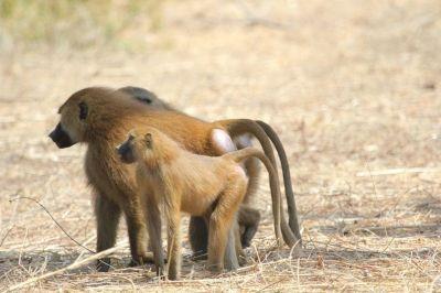 singes-babouins-5-1080p