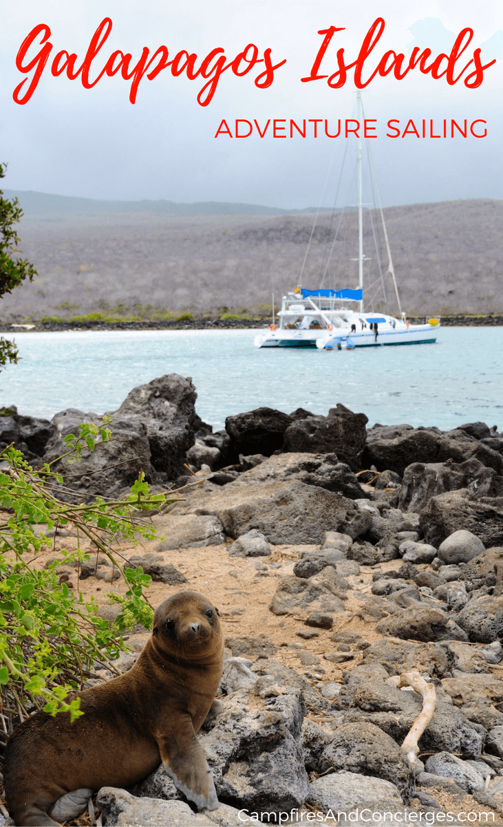Galapagos Sea Lion & Yacht