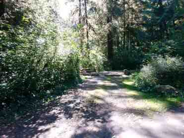 Bogachiel-State-Park-Campground-11