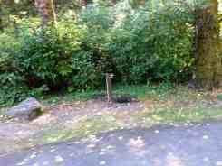 Bogachiel-State-Park-Campground-12